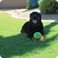Adopt A Pet :: Tundra - Gilbert, AZ