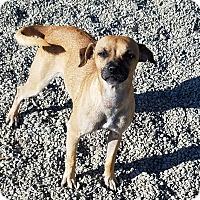 Adopt A Pet :: DELLA - Gustine, CA