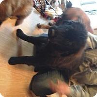 Adopt A Pet :: Foxy - Cincinnati, OH