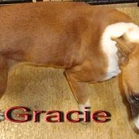 Adopt A Pet :: Gracie - Coleman, TX