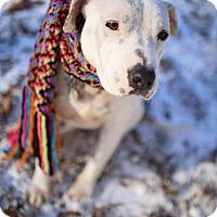 Adopt A Pet :: Tee Tee - Harrisonburg, VA