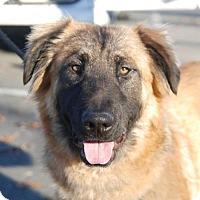 Adopt A Pet :: Havana - Sunnyvale, CA