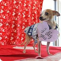 Adopt A Pet :: Bungee - Denver, CO