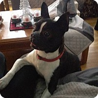 Adopt A Pet :: otis - North Brunswick, NJ