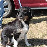 Adopt A Pet :: Ladybug Wilder's pups - Southampton, PA