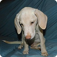 Adopt A Pet :: Bradley - Jarrettsville, MD