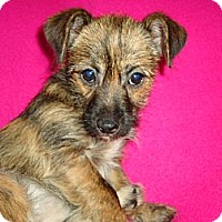 Adopt A Pet :: tabby - Staunton, VA