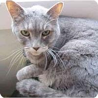 Adopt A Pet :: Pearl - Pascoag, RI