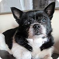 Adopt A Pet :: Marlow - Toronto, ON