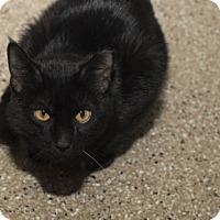 Adopt A Pet :: Aragon - Lombard, IL