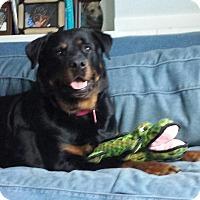 Adopt A Pet :: Rodney - Frederick, PA