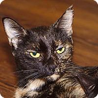 Adopt A Pet :: Maya - Chattanooga, TN