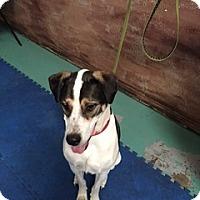 Adopt A Pet :: Rodger - Colorado Springs, CO