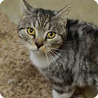 Adopt A Pet :: Chico - Eureka, CA