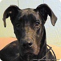 Adopt A Pet :: Isaac - Bethel, OH