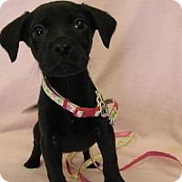 Adopt A Pet :: Rayna - Groton, MA