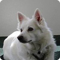Adopt A Pet :: SASHA OF CINCINNATI, OH - Lindsey, OH