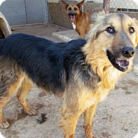 Adopt A Pet :: Sonora - San Tan Valley, AZ