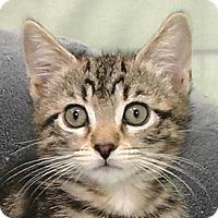 Adopt A Pet :: Scout - Redondo Beach, CA