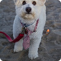 Adopt A Pet :: Valentino - Orange, CA