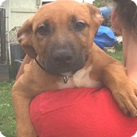 Adopt A Pet :: Brick - Medora, IN