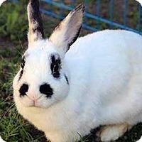 Adopt A Pet :: Love - Tustin, CA