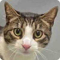 Adopt A Pet :: Rio - Medford, MA