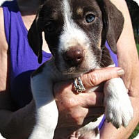 Adopt A Pet :: CLINT - Lincolndale, NY