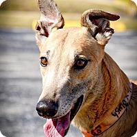 Adopt A Pet :: Oshkosh Keystone - Sarasota, FL
