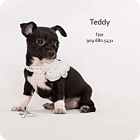 Adopt A Pet :: Teddy - Riverside, CA