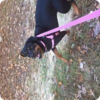 Adopt A Pet :: Sarah - Mooresville, NC