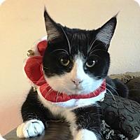 Adopt A Pet :: Sox - Riverside, CA