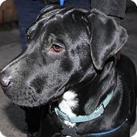 Adopt A Pet :: Deanna - Livonia, MI