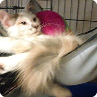 Adopt A Pet :: Penelope - Glen cove, NY