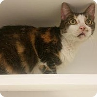 Adopt A Pet :: Merrily - Reisterstown, MD