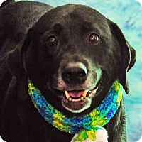 Adopt A Pet :: AGGIE - Louisville, KY