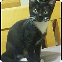 Adopt A Pet :: Kit - Brandon, FL