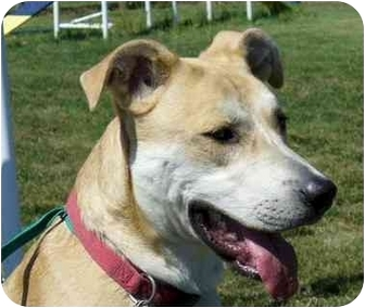 Labrador Retriever/Hound (Unknown Type) Mix Dog for adoption in Marysville, Ohio - Fella