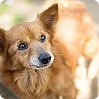 Terrier (Unknown Type, Medium) Mix Dog for adoption in Fresno, California - Sammy