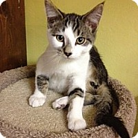 Adopt A Pet :: Abner - Byron Center, MI