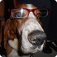 Adopt A Pet :: Brutus - Lockhart, TX