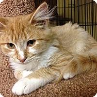 Adopt A Pet :: Olaf - Byron Center, MI