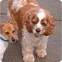 Adopt A Pet :: Tasha - Dayton, OH