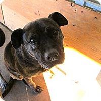 Adopt A Pet :: Big Mamma - Providence, RI