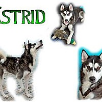 Adopt A Pet :: Astrid - Seminole, FL