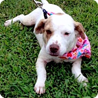 Adopt A Pet :: AVA - Leland, MS