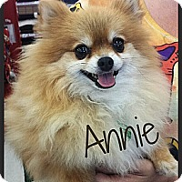 Adopt A Pet :: Annie - Escondido, CA