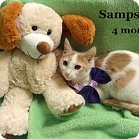 Adopt A Pet :: Sampson - Bentonville, AR