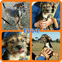 Adopt A Pet :: Eddie - Williston, FL