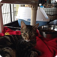 Adopt A Pet :: Belle - Port Republic, MD
